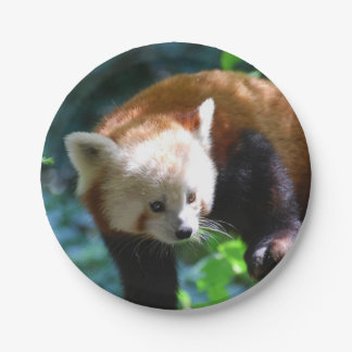 Inquisitive Red Panda Bear 7 Inch Paper Plate