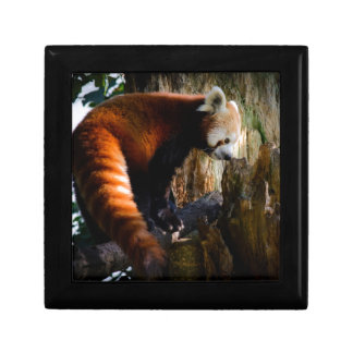 inquisitive red panda gift box