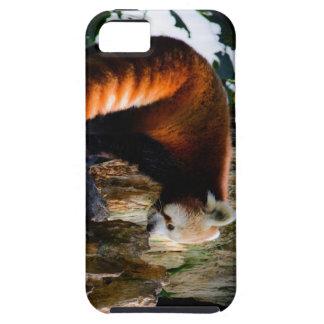 inquisitive red panda iPhone SE/5/5s case