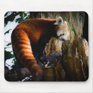 inquisitive red panda mouse pad