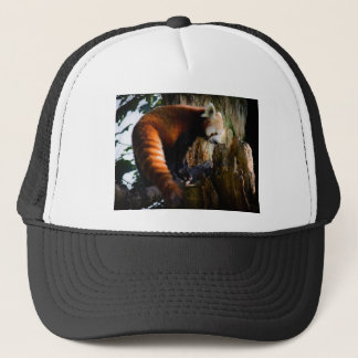 inquisitive red panda trucker hat