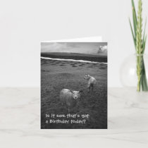 Inquisitive Sheep birthday card