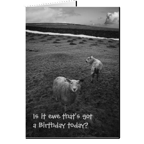 Inquisitive Sheep birthday card