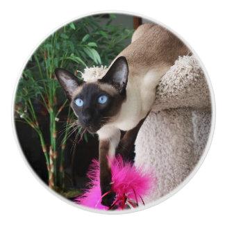 Inquisitive Siamese Cat Ceramic Knob