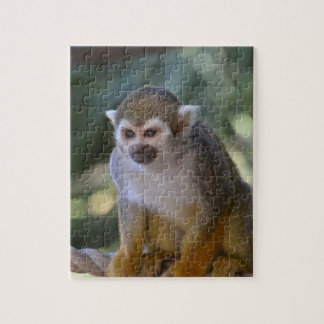 Inquisitive Squirrel Monkey Jigsaw Puzzles