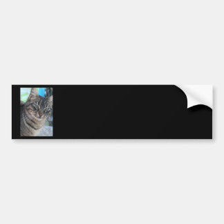 Inquisitive Tabby Cat With Green Eyes Bumper Stickers