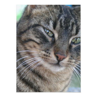 Inquisitive Tabby Cat With Green Eyes Card