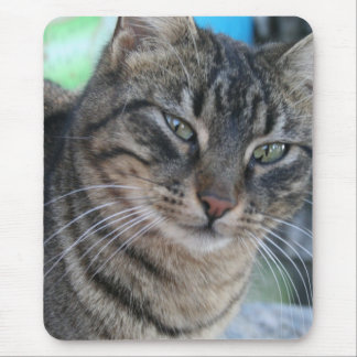 Inquisitive Tabby Cat With Green Eyes Mouse Pad