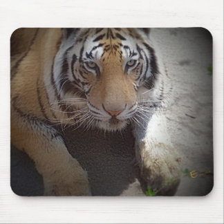 Inquisitive Tiger Gifts Mouse Pad