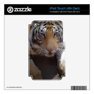 Inquisitive Tiger Gifts iPod Touch 4G Skins