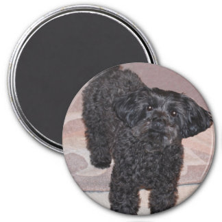 Inquisitive Yorkie Poo 3 Inch Round Magnet