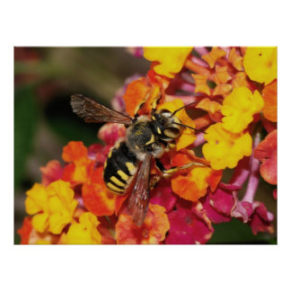 Insect Autumn Print