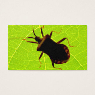 Insect   Card De   Visita