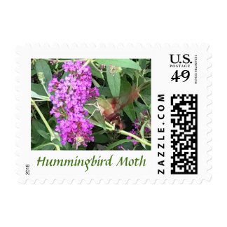 Insect Hummingbird Moth Photo Text Stamps