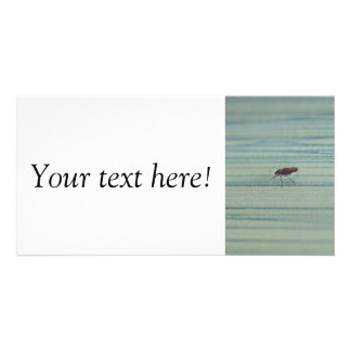 Insect macro personalized photo card