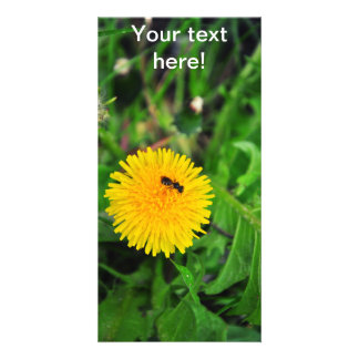 Insect on a dandelion photo card template