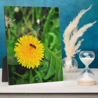 Insect on a dandelion display plaques