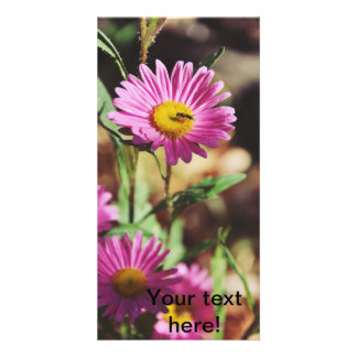 Insect on a pink flower picture card