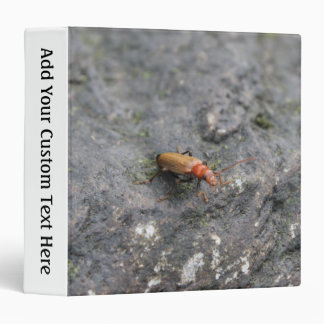 Insect on a rock. binder