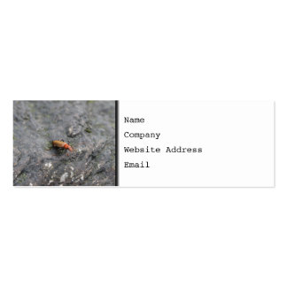 Insect on a rock. Double-Sided mini business cards (Pack of 20)