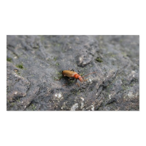 Insect on a rock. Double-Sided standard business cards (Pack of 100)