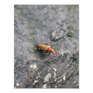 Insect on a rock. personalized invites