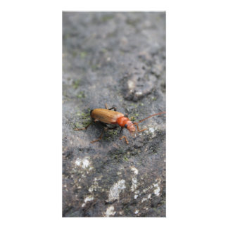 Insect on a rock. personalized photo card