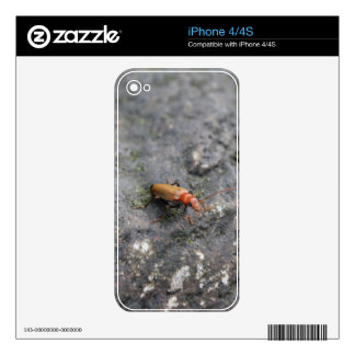 Insect on a rock decal for the iPhone 4