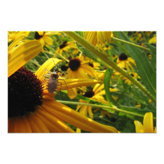 Insect on Brown-Eyed Susans Photographic Print