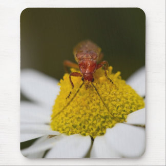 Insect on Pollen Mouse Pad