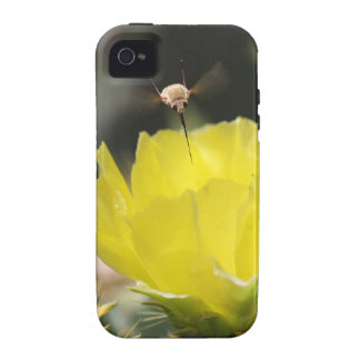 Insect on South Texas Cactus Flower Photograph Case-Mate iPhone 4 Cover