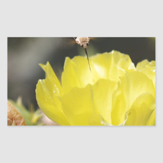 Insect on South Texas Cactus Flower Photograph Rectangular Sticker