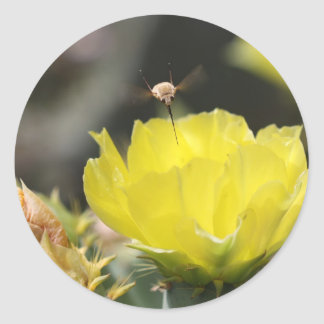 Insect on South Texas Cactus Flower Photograph Round Sticker