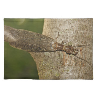 Insect Placemat