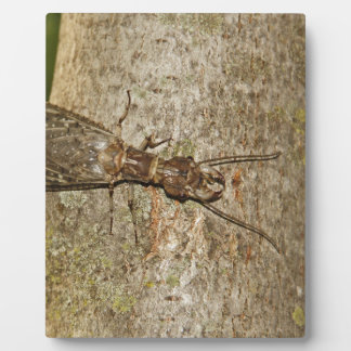 Insect Photo Plaque