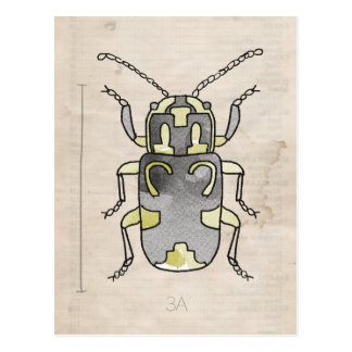 Insect Series | Green Beetle Postcard