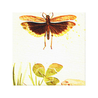 INSECT WITH CLOVER CANVAS PRINT
