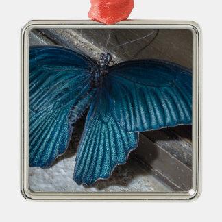 insecto azul de la mariposa que vuela las alas adorno cuadrado plateado