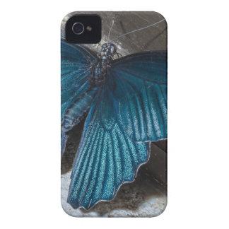 insecto azul de la mariposa que vuela las alas funda para iPhone 4 de Case-Mate