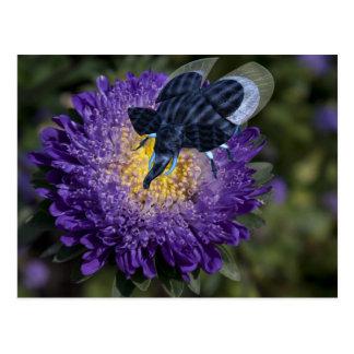 Insecto azul raro del elefante postales