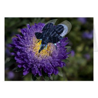 Insecto azul raro del elefante tarjeta de felicitación