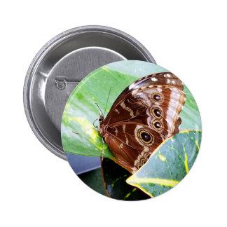 insecto bonito de la imagen del moreno del marrón pin redondo de 2 pulgadas