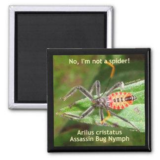 Insecto de asesino de la araña roja imán cuadrado