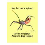 Insecto de asesino de la araña roja tarjeta postal