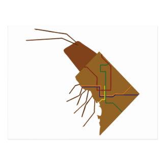 Insecto de DC Tarjeta Postal