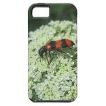 Insecto de fuego iPhone 5 protector
