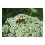 Insecto de fuego tarjeta