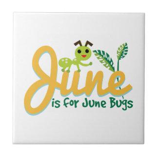 Insecto de junio tejas