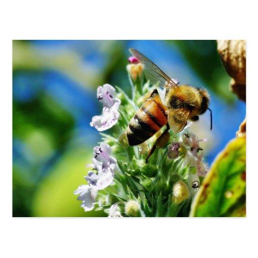 Insecto de la abeja postal