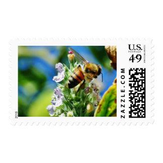 Insecto de la abeja sello